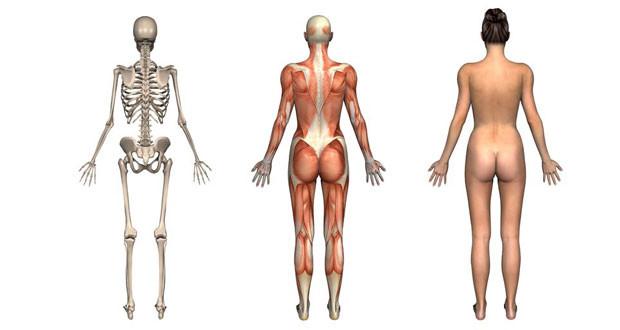 anatomi001